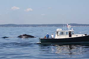 whale-watch-gloucester-ma