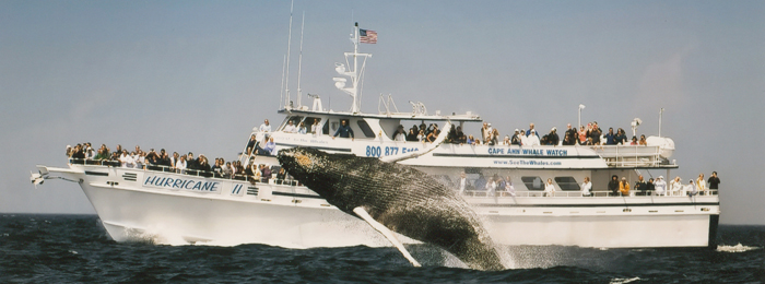 Best Boston Whale Watching Tours
